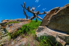 D8504837-Burmis-Tree-view-1