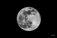 Full Moon in Black and White -D8502407