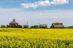 D8505101-Abandoned-Farmstead-near-Vulcan-Alberta