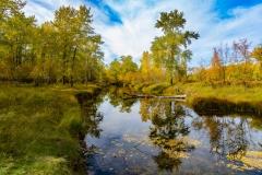1_Autumn-Colurs-of-Carburn-Park