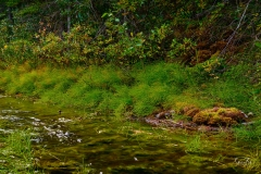 8507510-Stream-with-moss-covered-rock-on-the-Smith-Dorian-Trail_