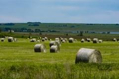 Bales-in-field-east-of-Langdon