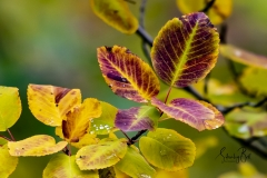 Autumn-Leaves-in-early-morning-5