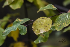 Autumn-Leaves-in-early-morning-2