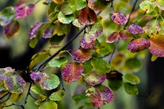 Autumn-Leaves-in-early-morning-8