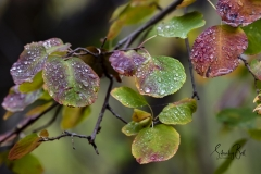 Autumn-Leaves-in-early-morning-4