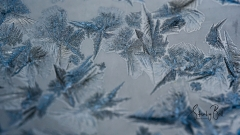 Frost-Crystals-4