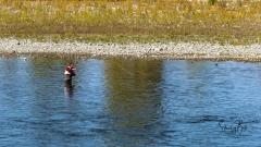 Fly-Fisherman-on-The-Bow-River-in-Autumn